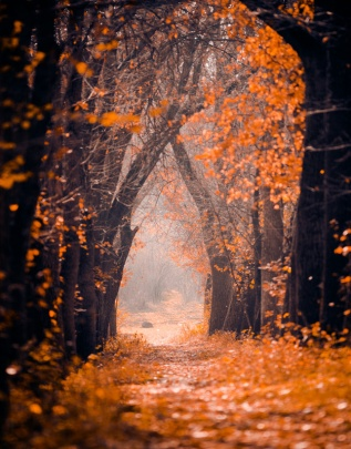 Autumn-Forest-Scene-Photography-Background-Computer-Printed-Digital-Cloth-Vinyl-Backdrops-Backgrounds-Spray-Painted-Photo-Props